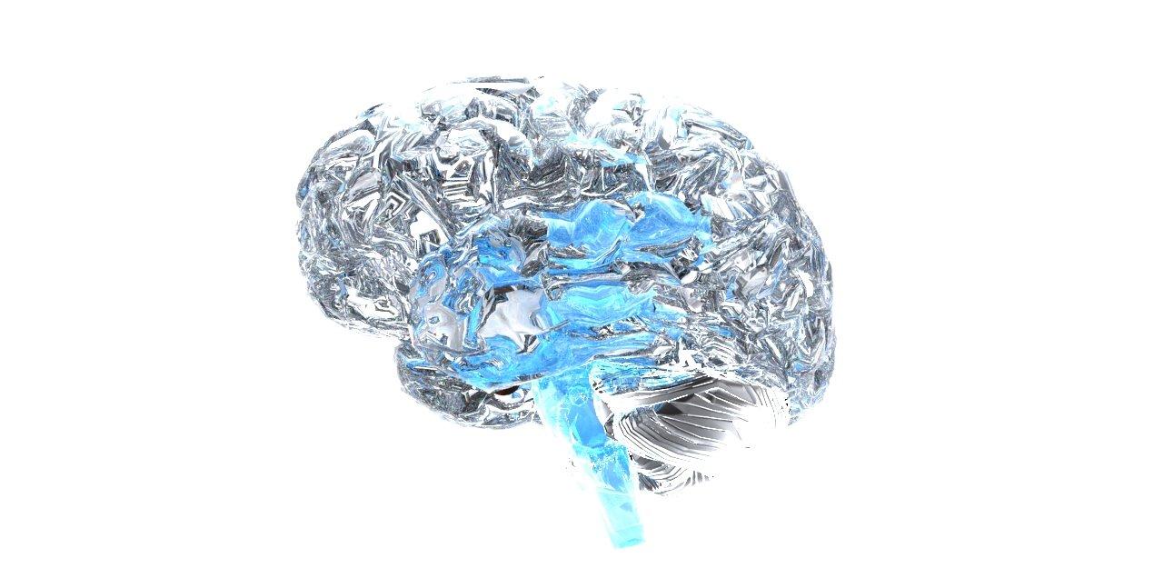 the amazing brain essay