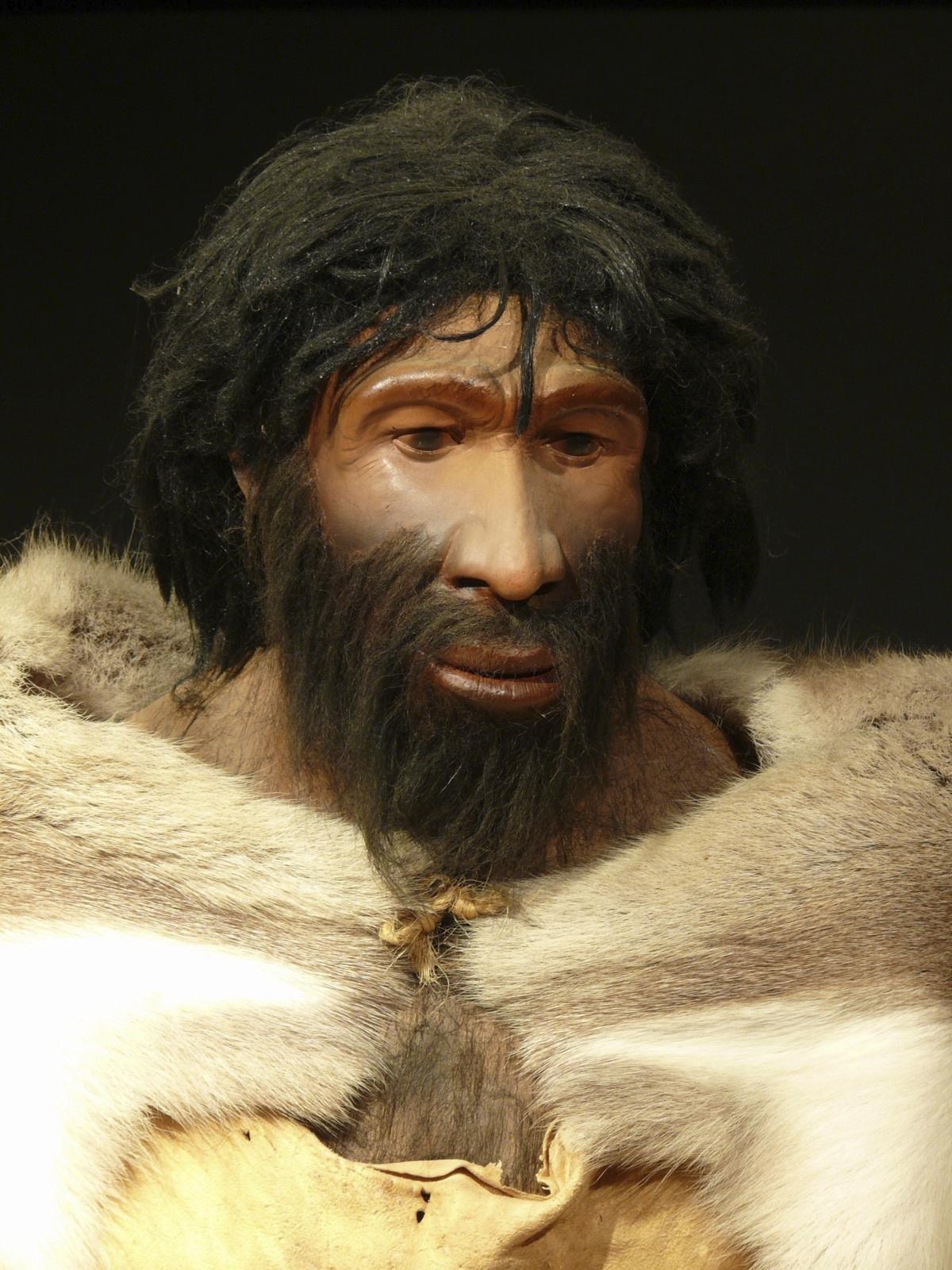 NeanderthalHomo Sapiens Hybrid Essay