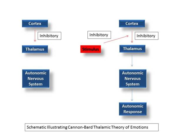 CannonBardThalamicTheoryofEmotions