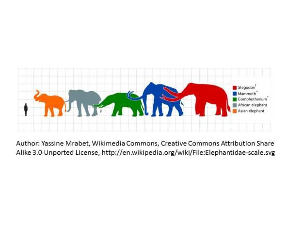 elephantcomparison