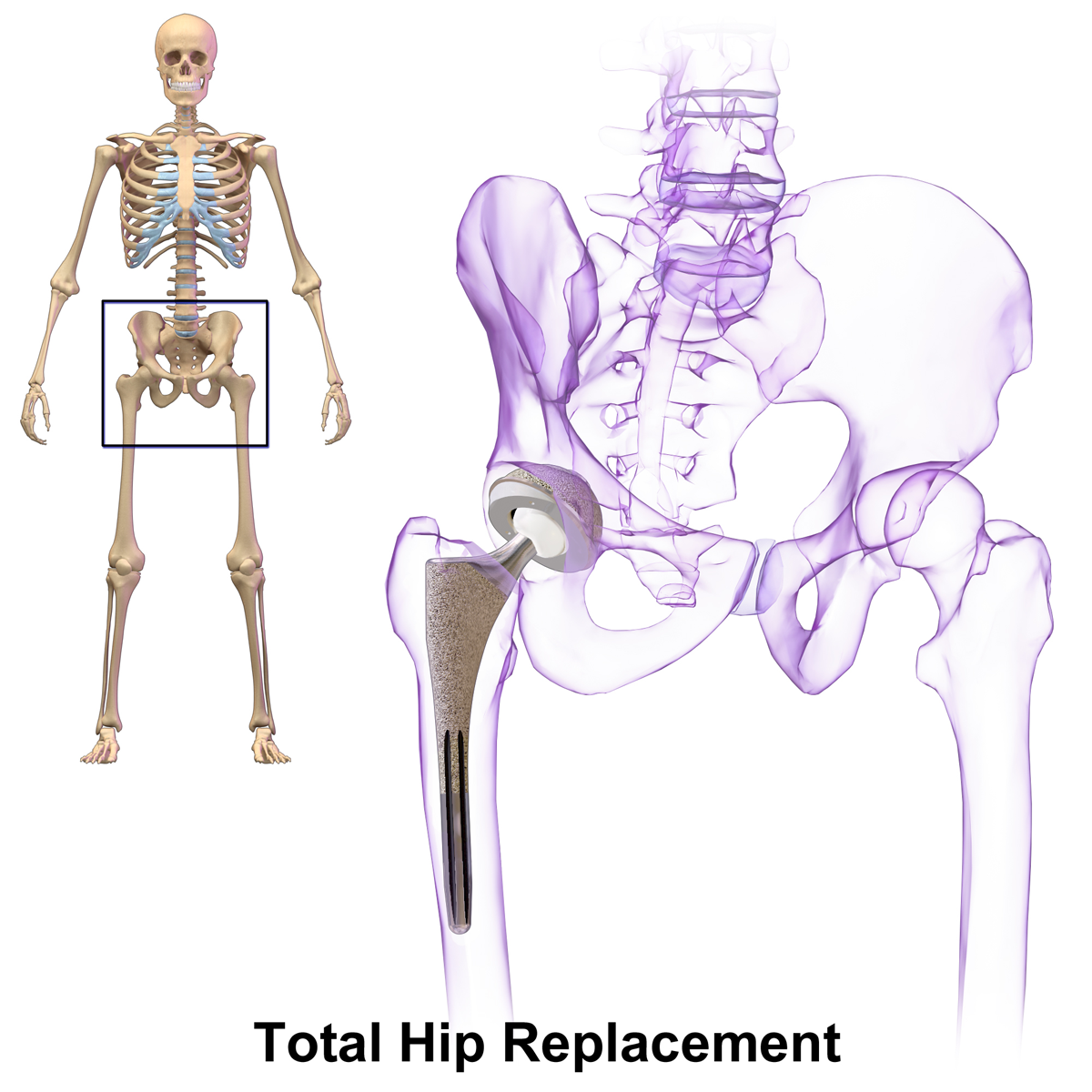 Hip Anatomy Diagram Creative Commons Block And Schematic Diagrams