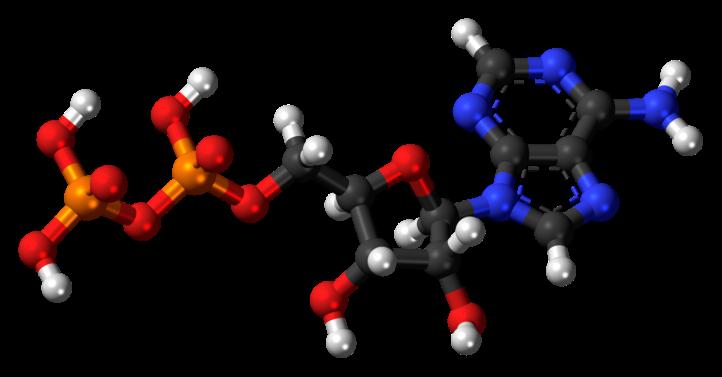 1280px-Adenosine-diphosphate-3D-balls