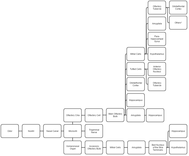 Comprehensive_List_of_Relevant_Pathways_for_the_Olfactory_System